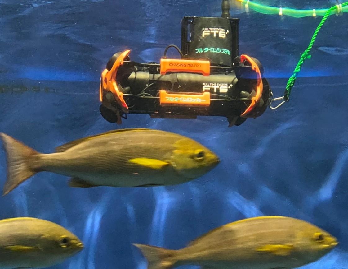 魚の群れを撮影する水中ドローン